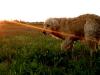 oliver-puesta-de-sol-campo