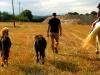 ponys-paseo