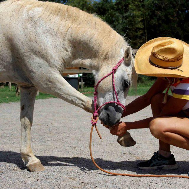 ¿Qué te hacen sentir los caballos?